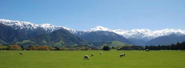 Yeni Zelanda dil okulu promosyonları