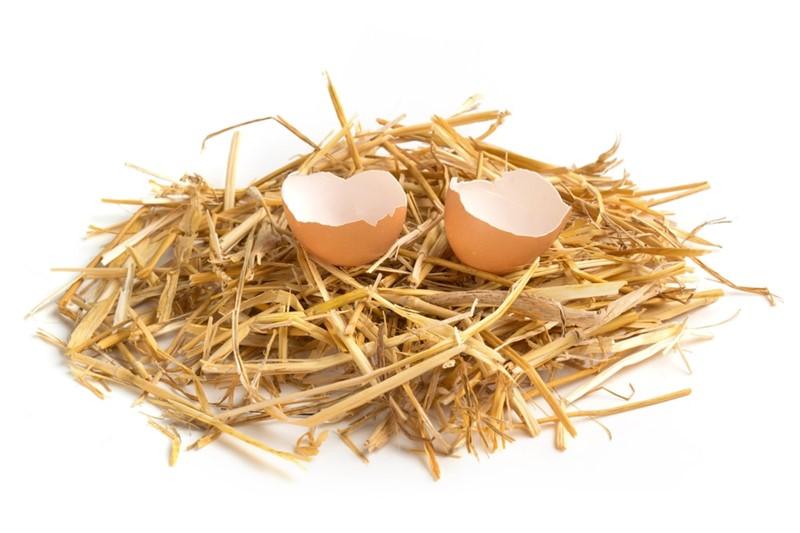 Dont count your chickens before they hatch, Yumurtlamadan önce, tavuklarını sayma. İngilizce atasözü ve Türkçe karşılığı