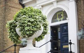 the london school of english executive okul